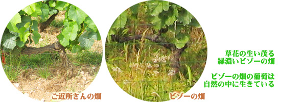 ビゾーの畑